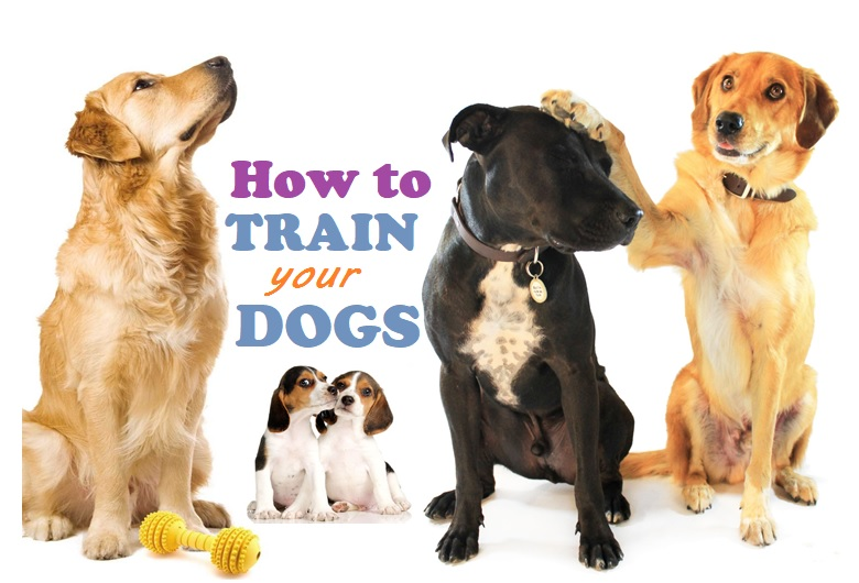 How to Train Your Dogs